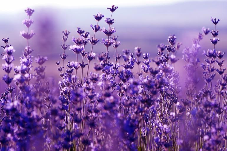 Provence image 2