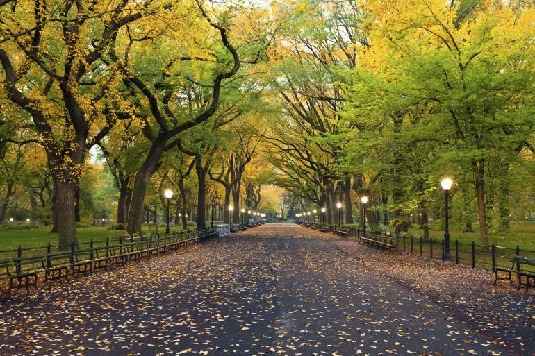 New York image 3