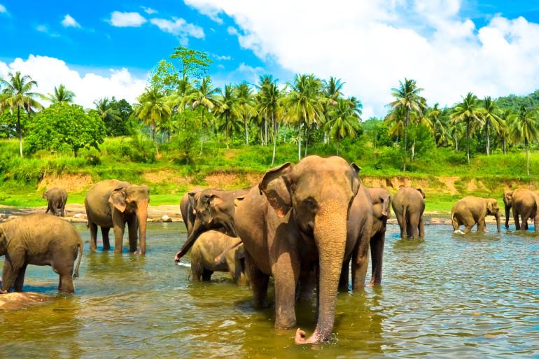 Sri Lanka image 5