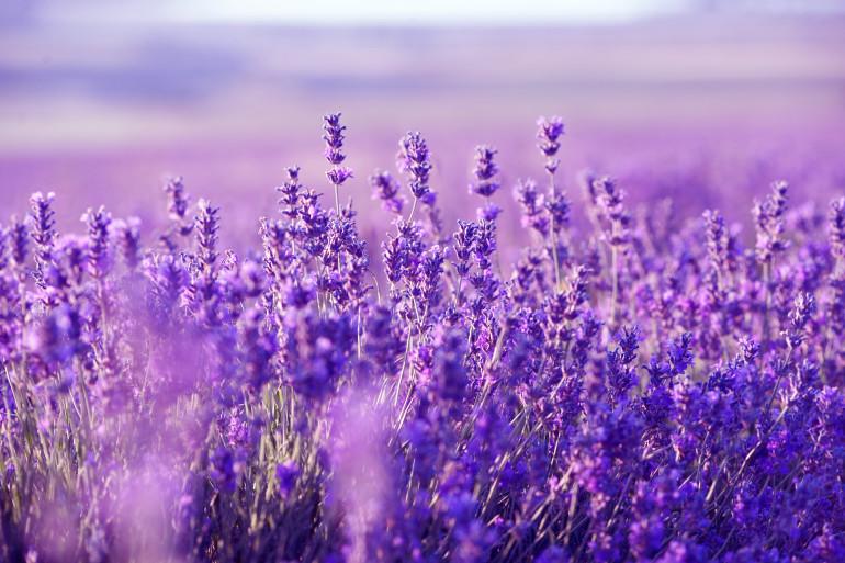 Provence image 3