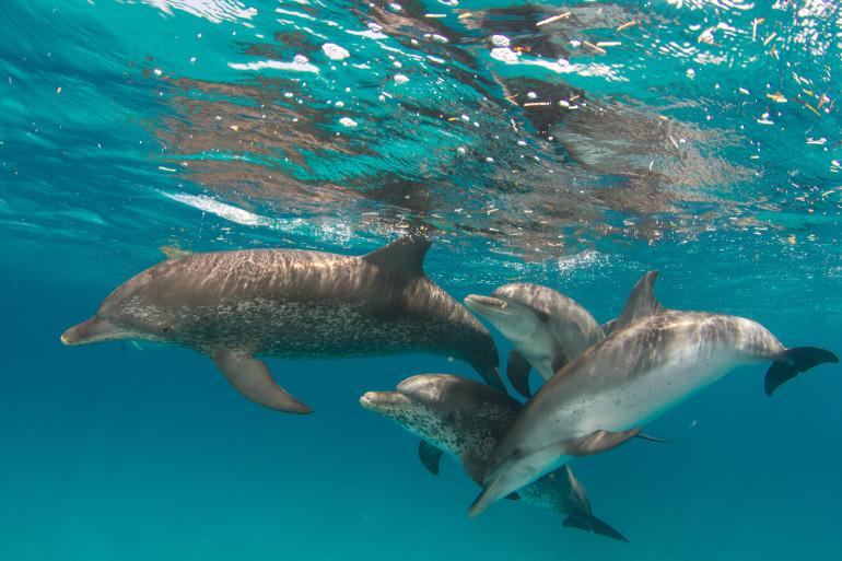 Bahamas image 3