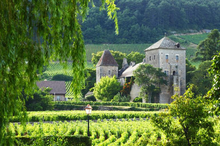 Burgundy image 1