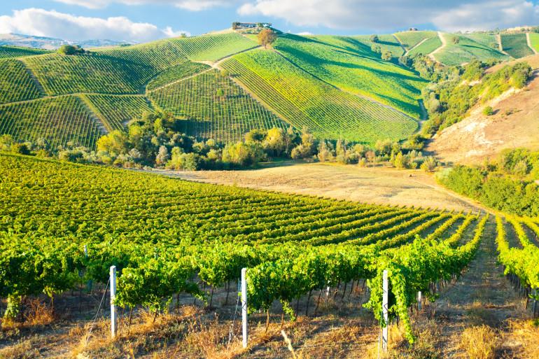 Bordeaux image 3