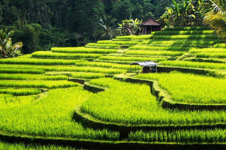 Bali image 5