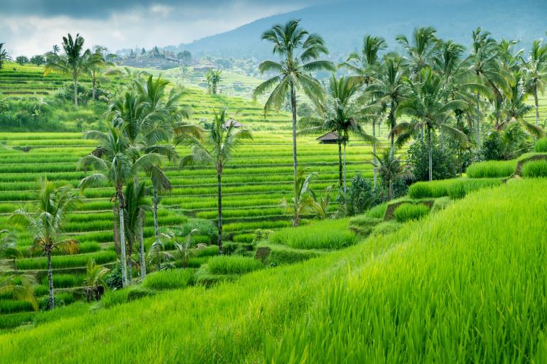 Bali image 6