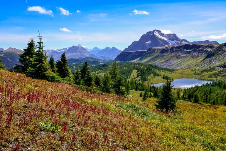 Alberta image 3