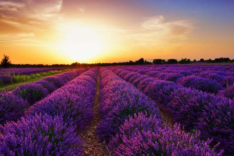 Provence image 5