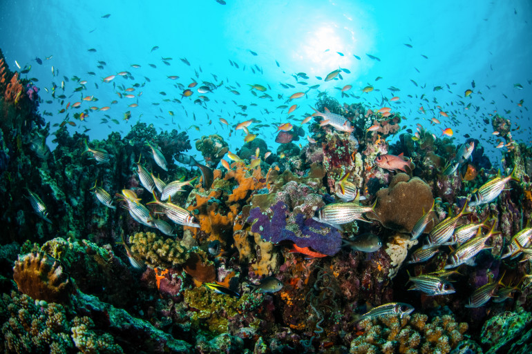 Gili Islands image 6