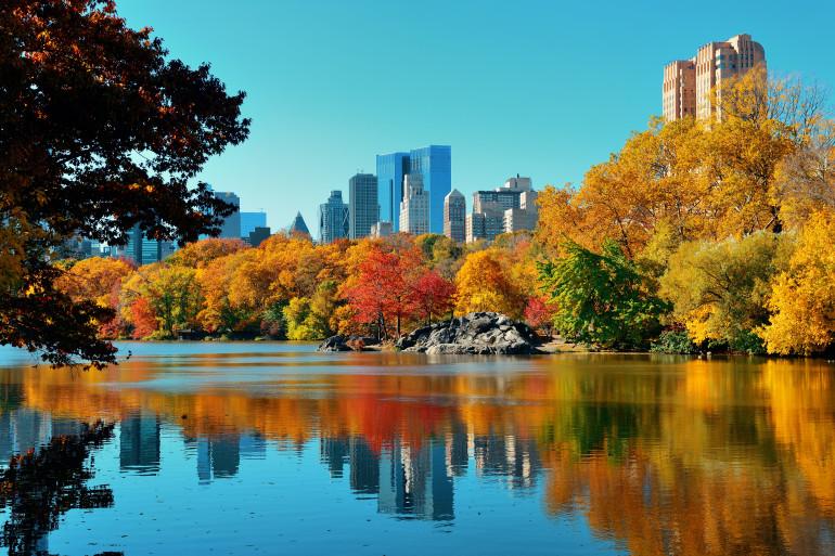 New York image 6