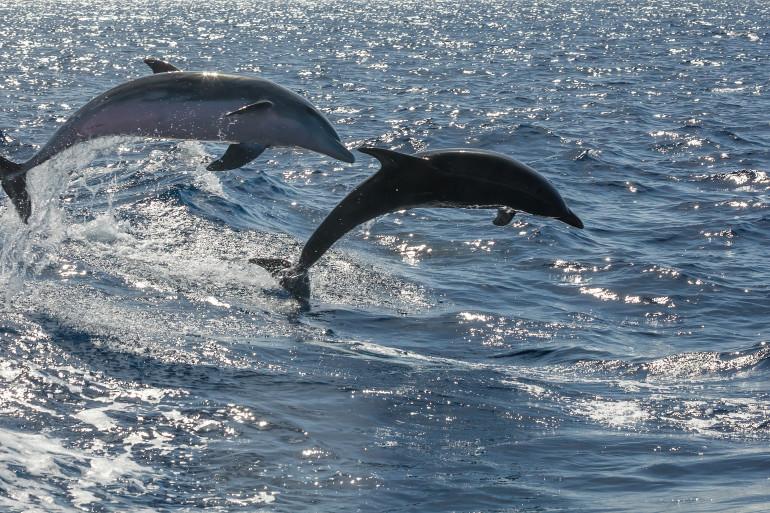 Tenerife image 8