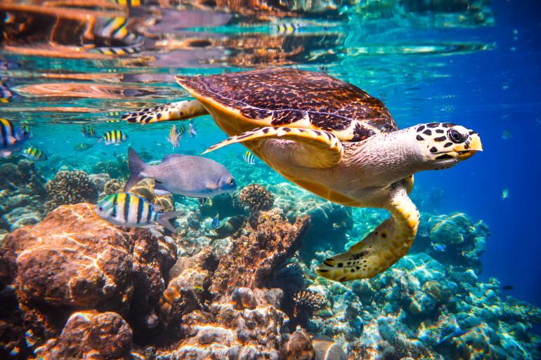 Maldives image 6