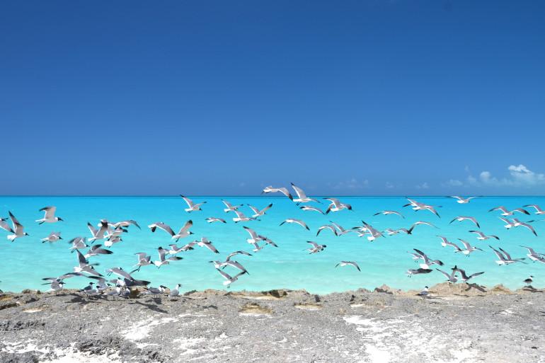 Bahamas image 6