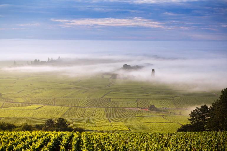 Burgundy image 2