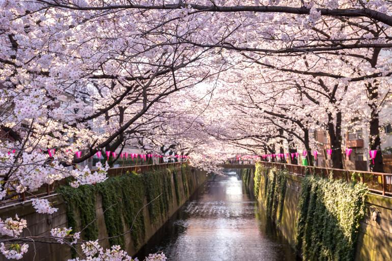 Tokyo image 9