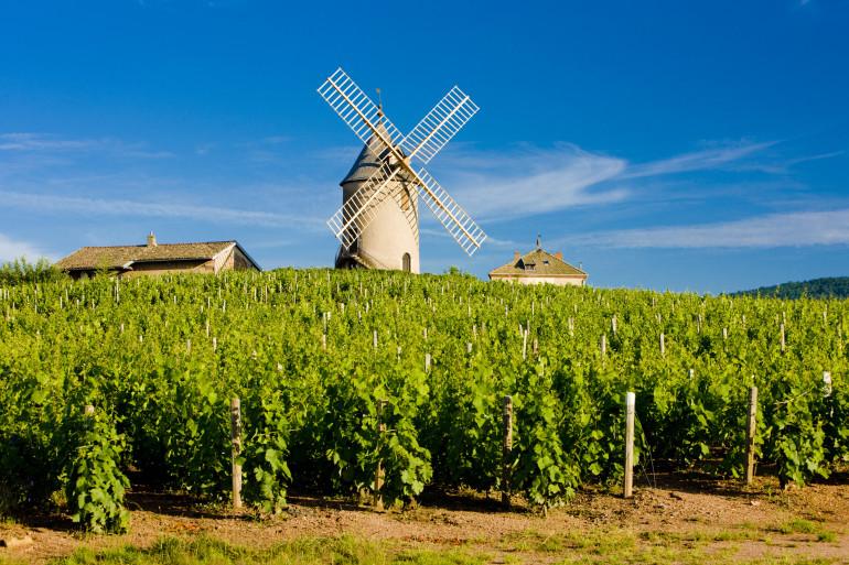 Burgundy image 4