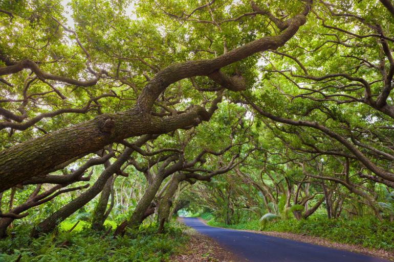 Hawaii image 15