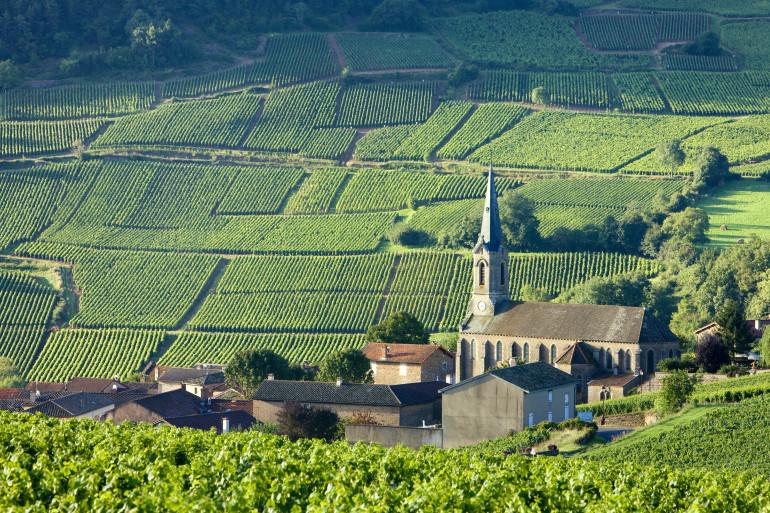 Burgundy image 5