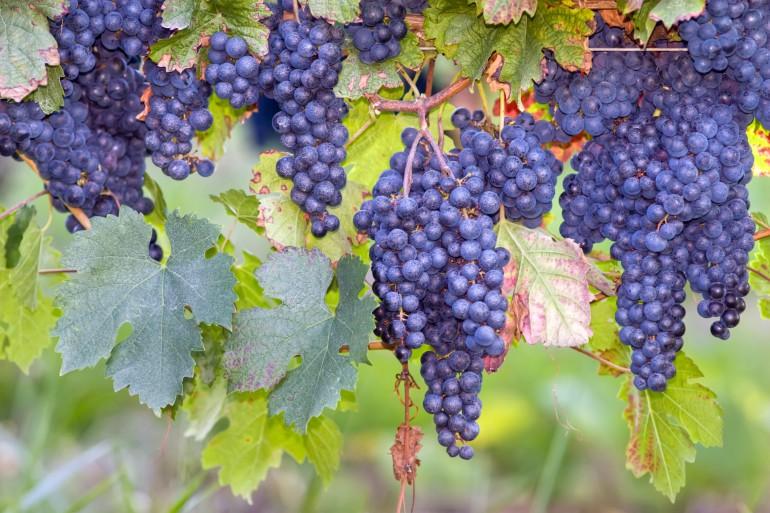 Bordeaux image 7