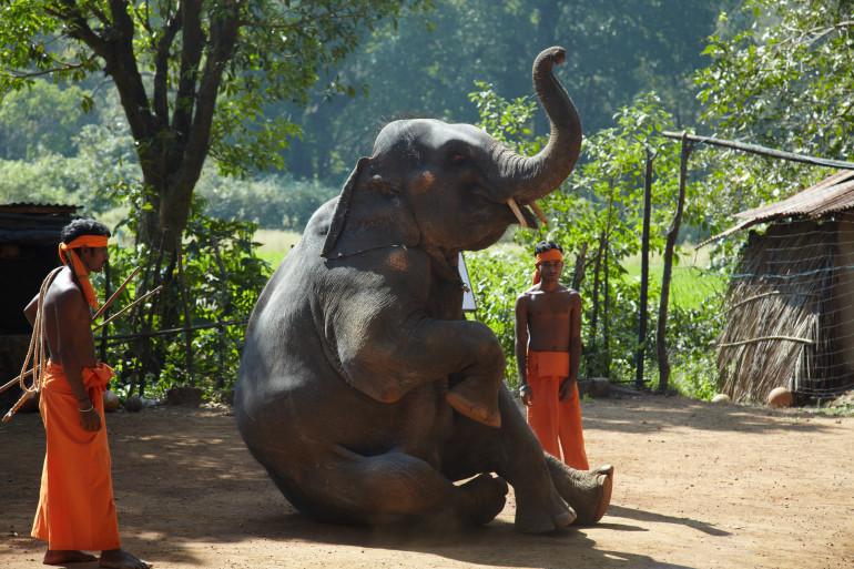 Goa image 9