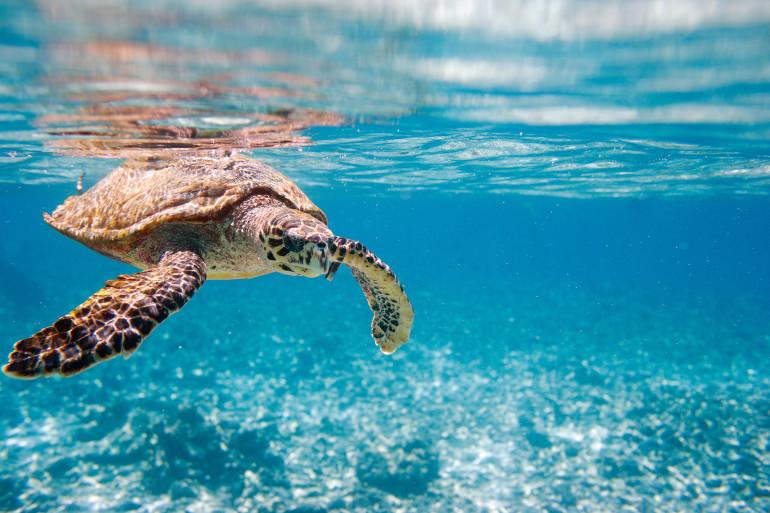 Seychelles image 7