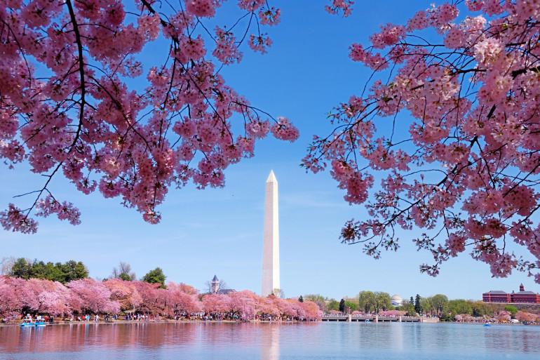 Washington D.C. image 7