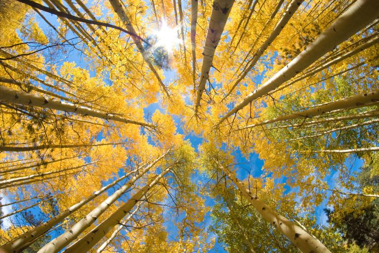 Colorado image 9