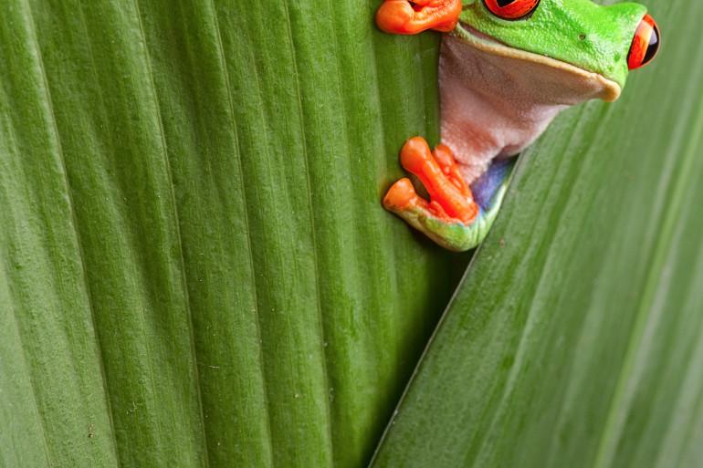 Costa Rica image 9